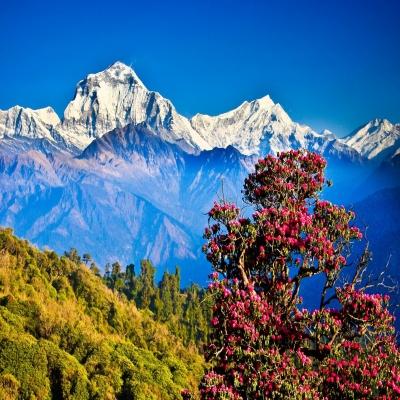 10 Hari Beautiful Bhutan dan Nepal
